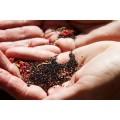 Амарант черный органический, 1 кг