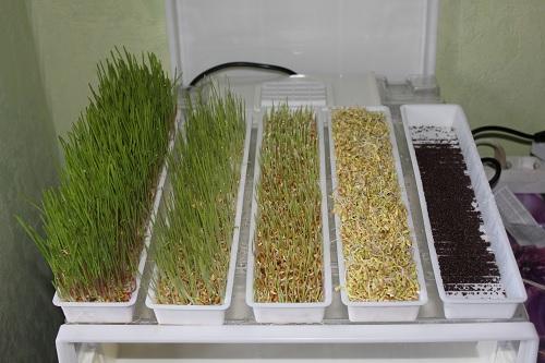 Как хранить пшеницу в домашних условиях - Eventwed.ru